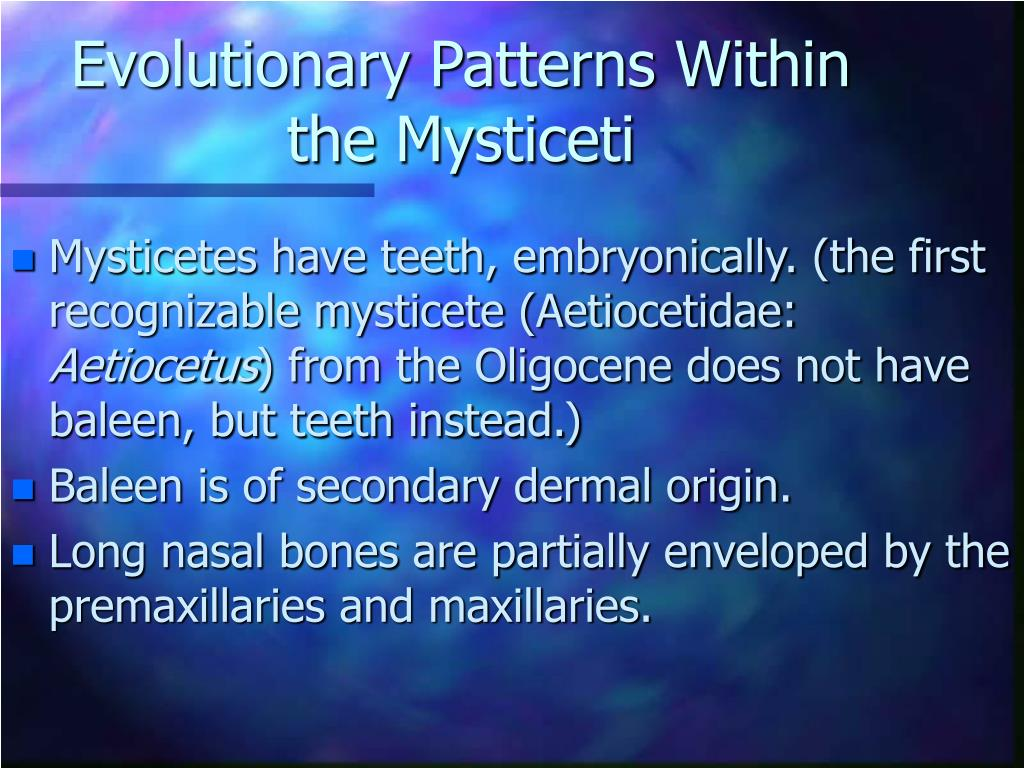 Evolutionary Patterns Within the Mysticeti