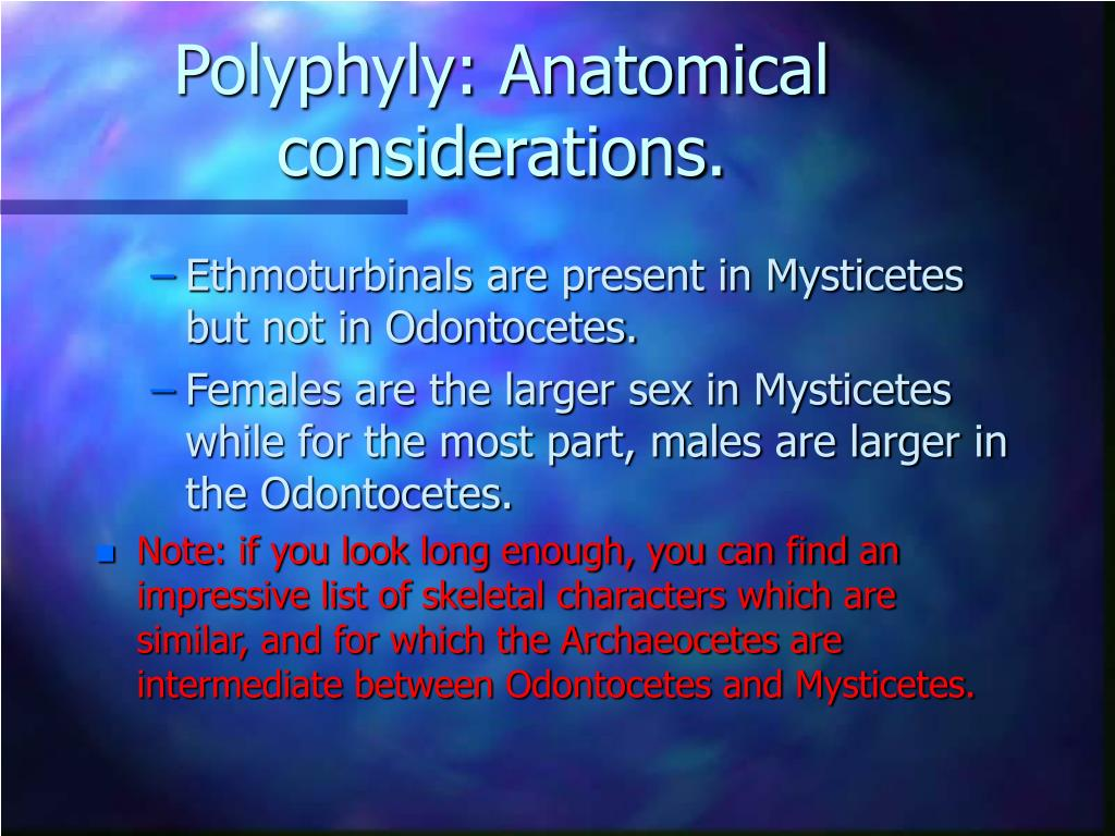 Polyphyly: Anatomical considerations.