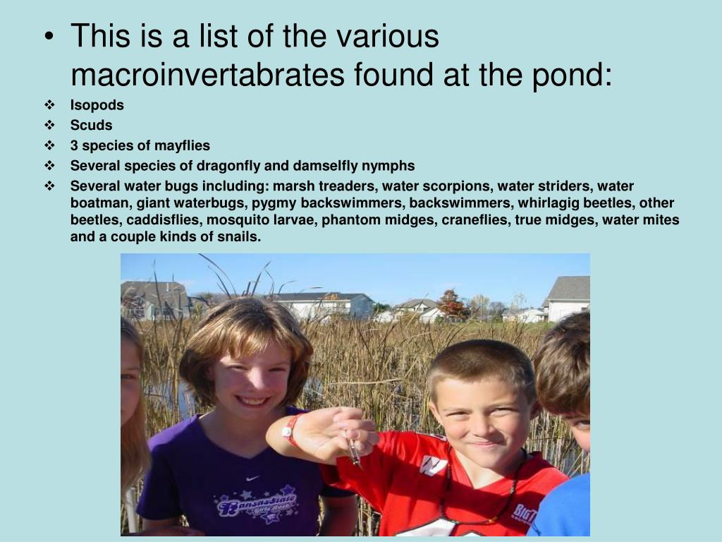 This is a list of the various macroinvertabrates found at the pond: