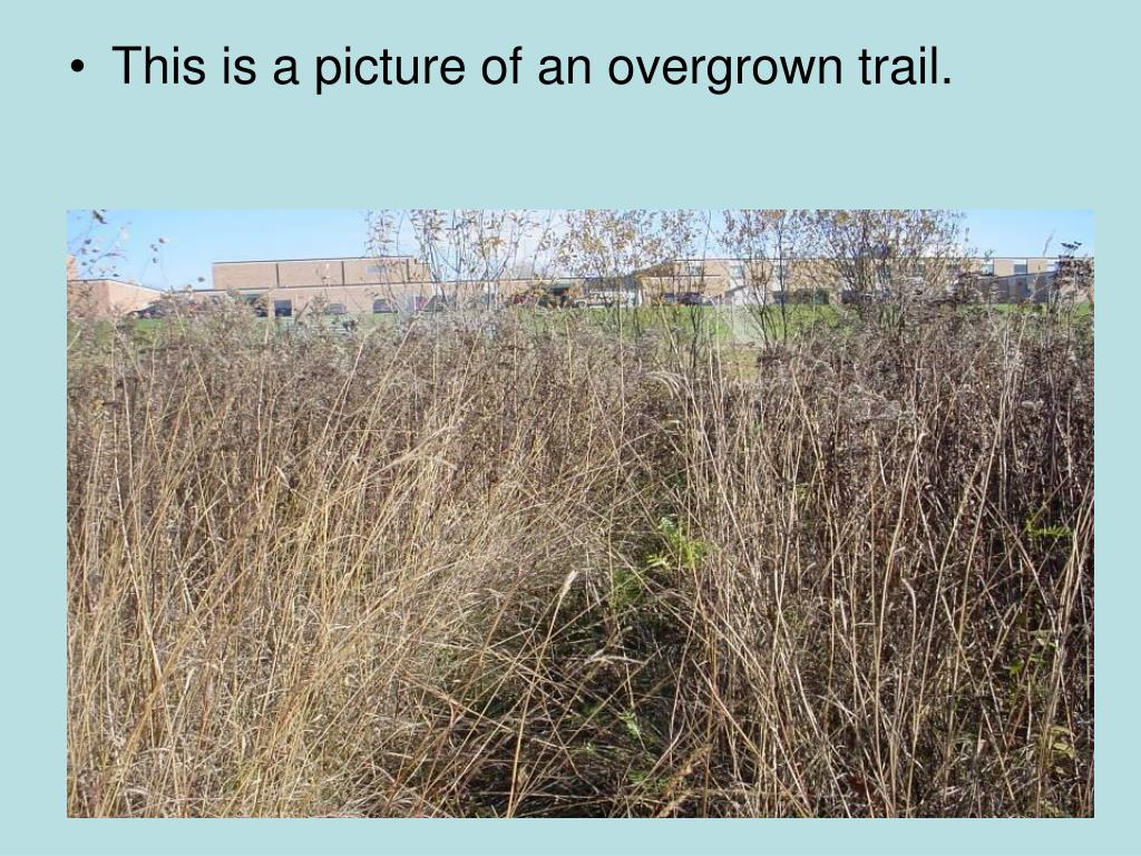This is a picture of an overgrown trail.