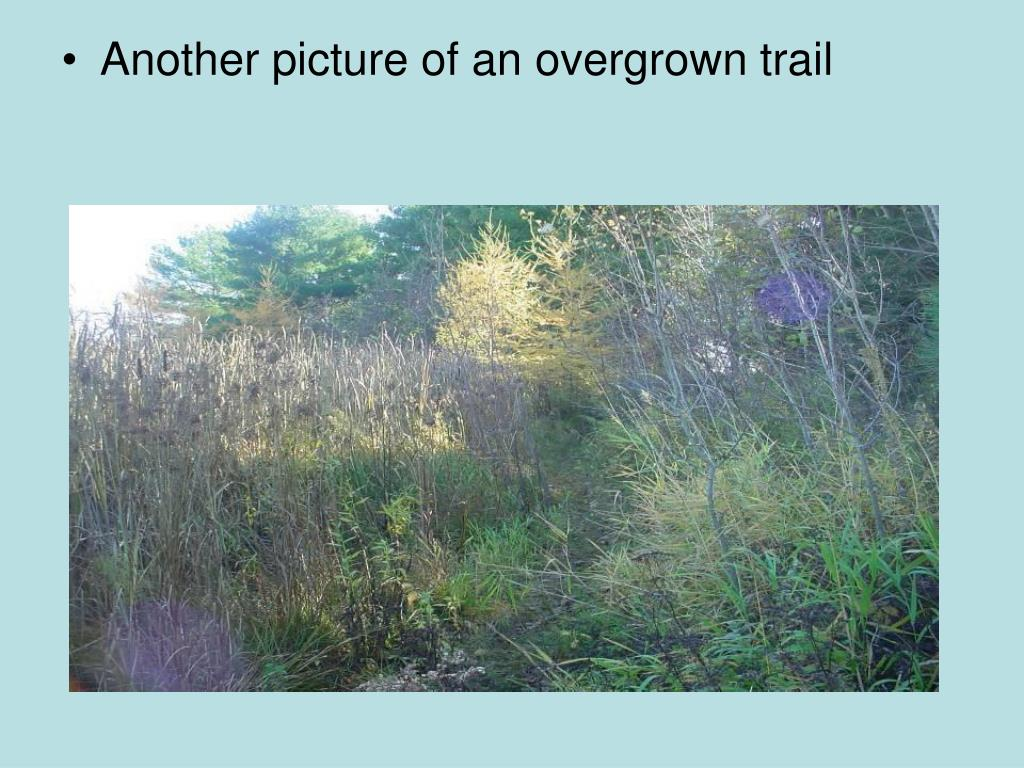 Another picture of an overgrown trail