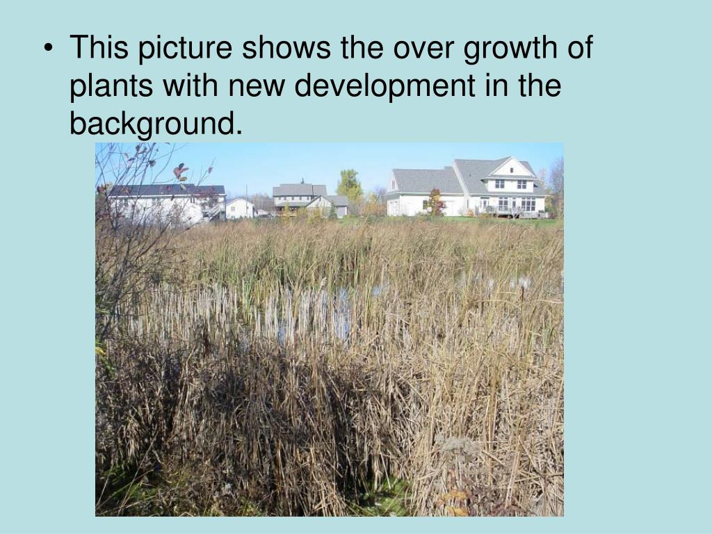 This picture shows the over growth of plants with new development in the background.