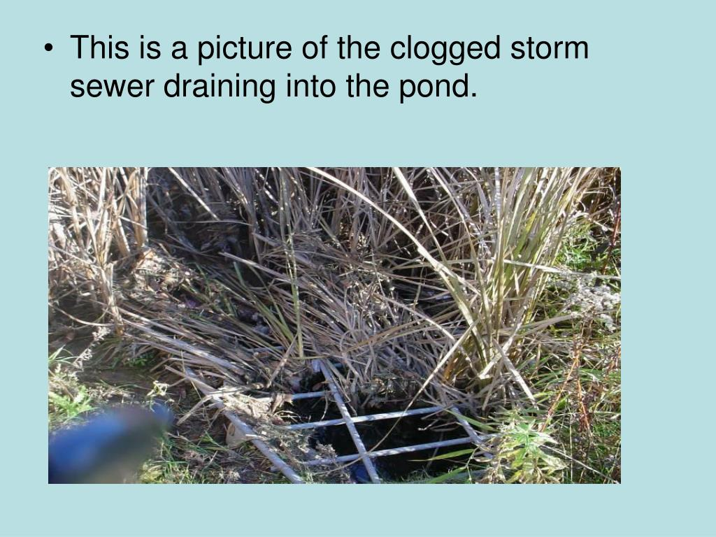 This is a picture of the clogged storm sewer draining into the pond.