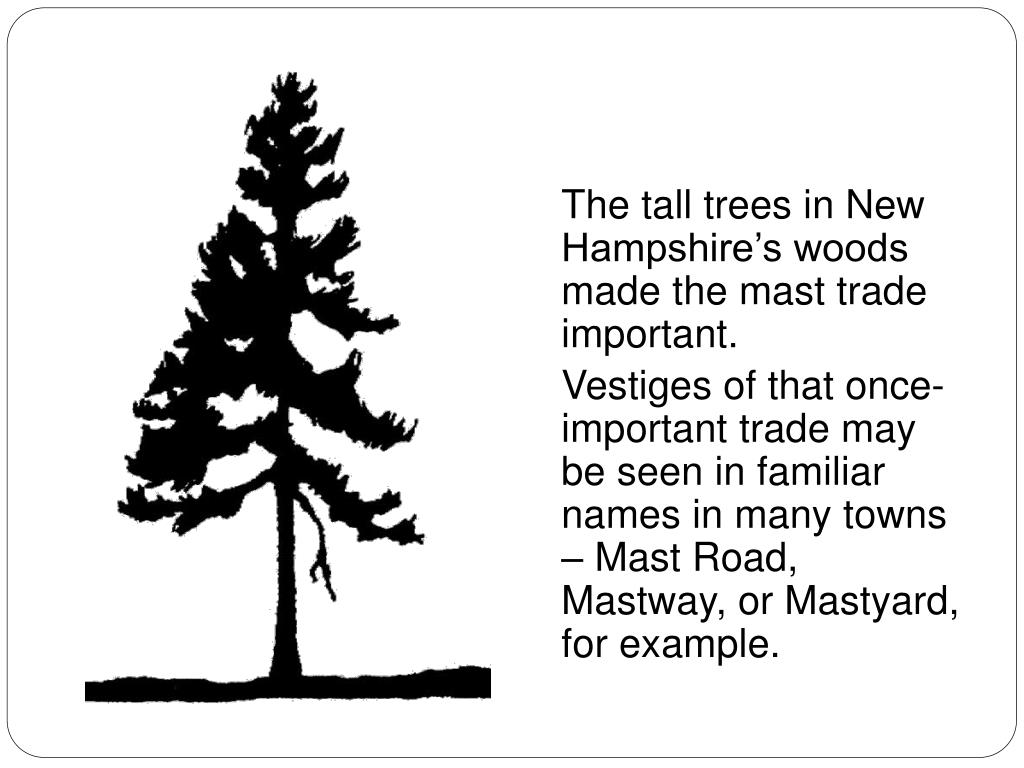 The tall trees in New Hampshires woods made the mast trade important.