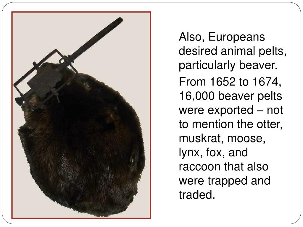 Also, Europeans desired animal pelts, particularly beaver.