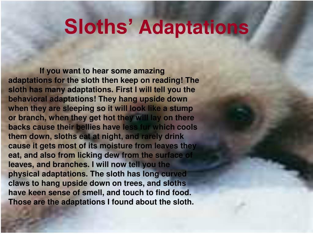 Sloths'