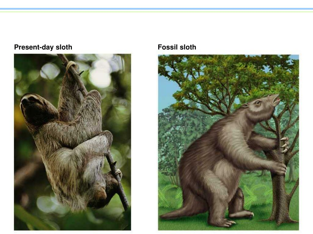 Present-day sloth
