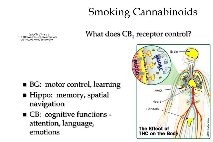 Smoking Cannabinoids