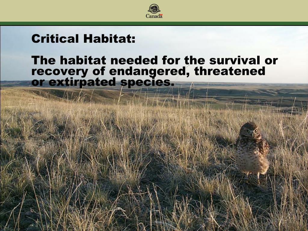 Critical Habitat:
