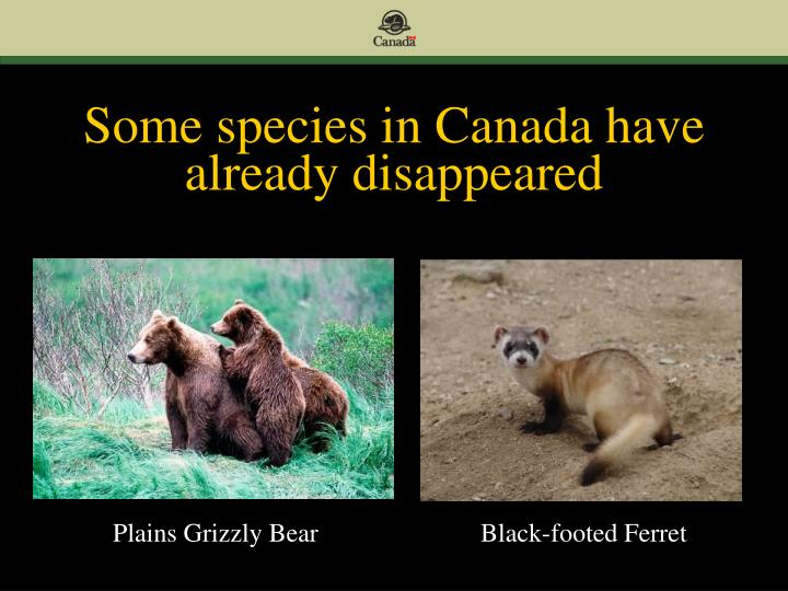 Some species in Canada have already disappeared