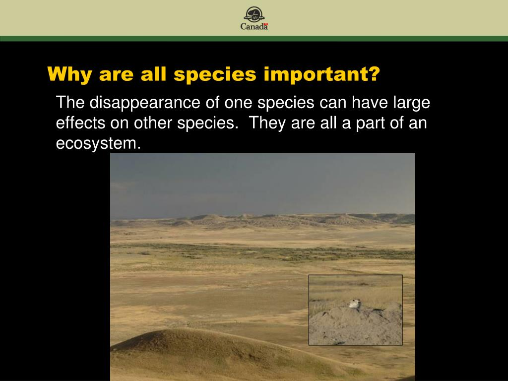 Why are all species important?