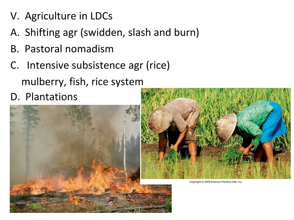 V.  Agriculture in LDCs