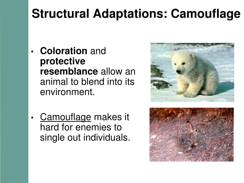 Structural Adaptations: Camouflage