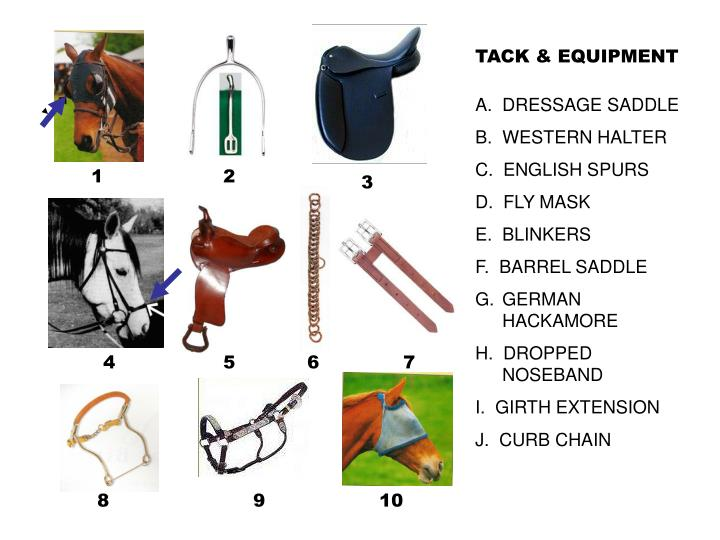 TACK & EQUIPMENT