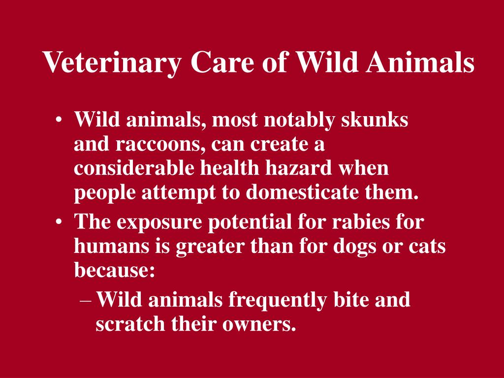 Veterinary Care of Wild Animals