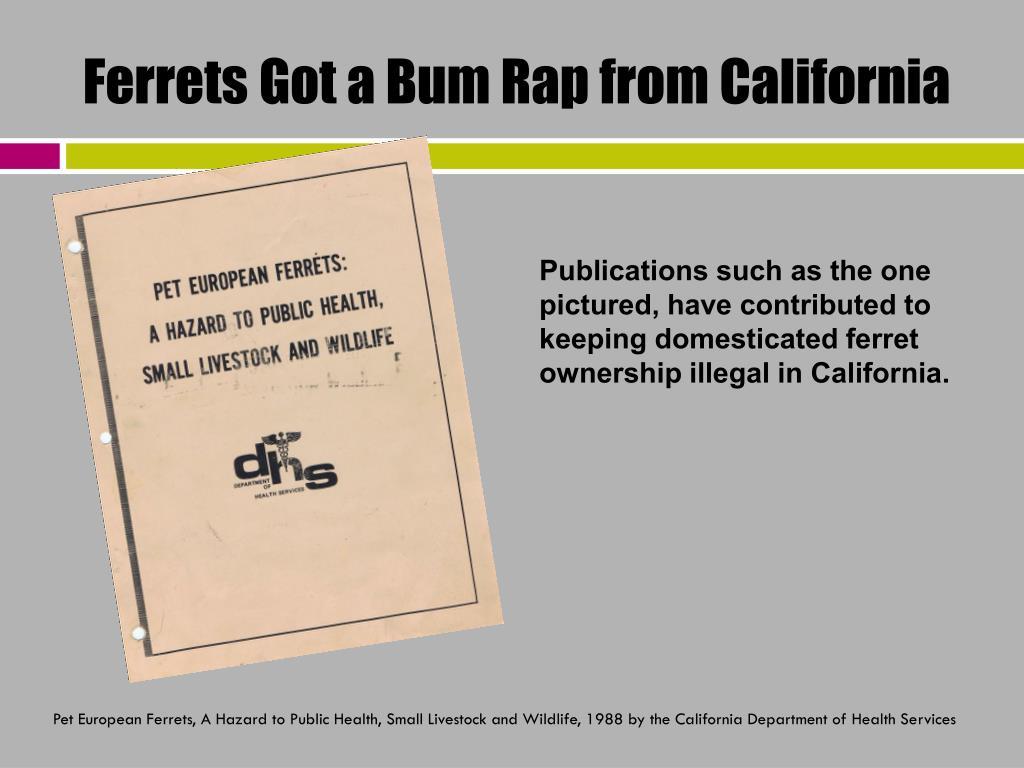 Ferrets Got a Bum Rap from California