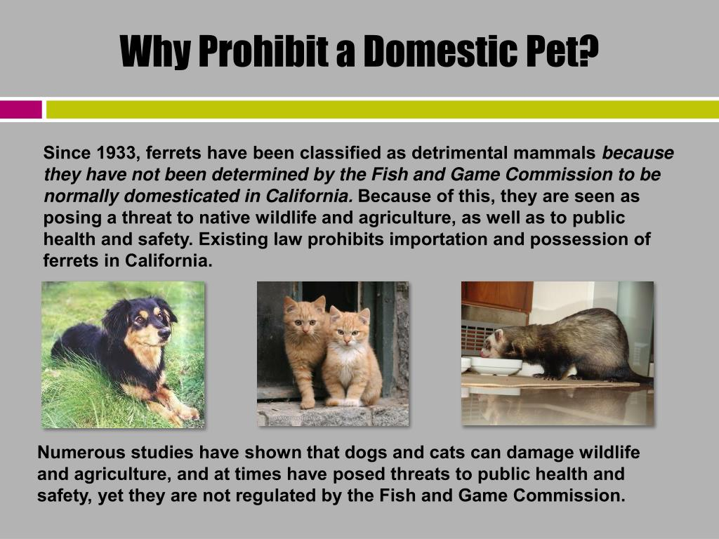 Why Prohibit a Domestic Pet?