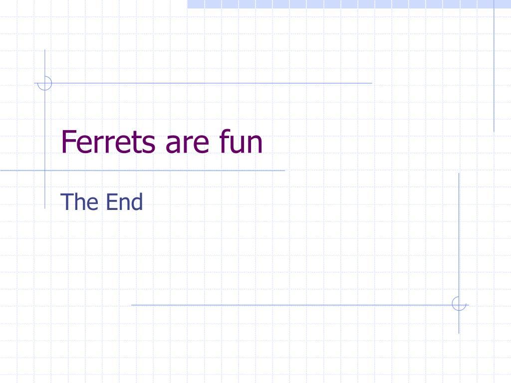 Ferrets are fun