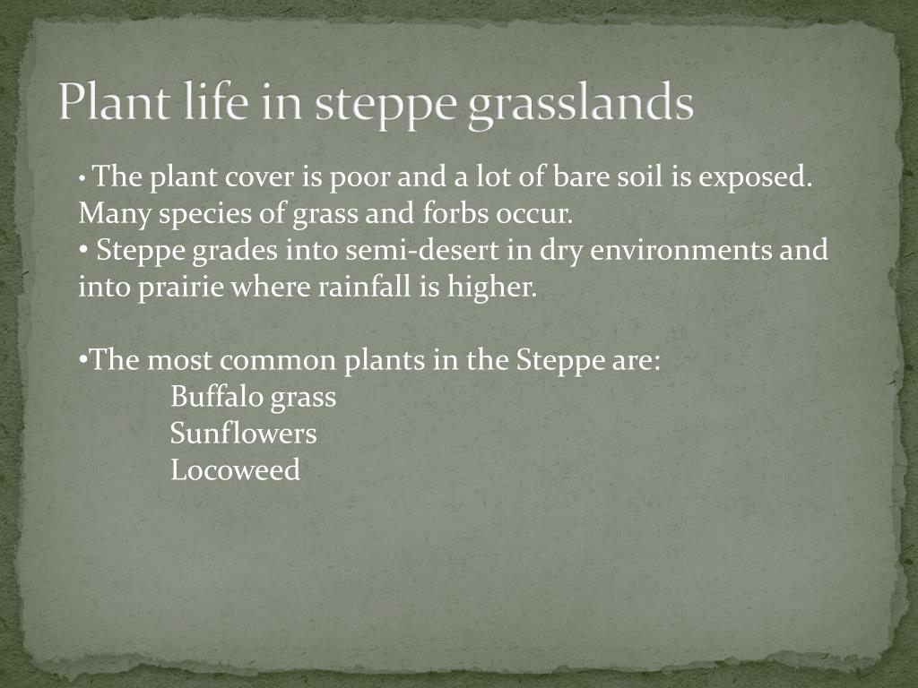 Plant life in steppe grasslands