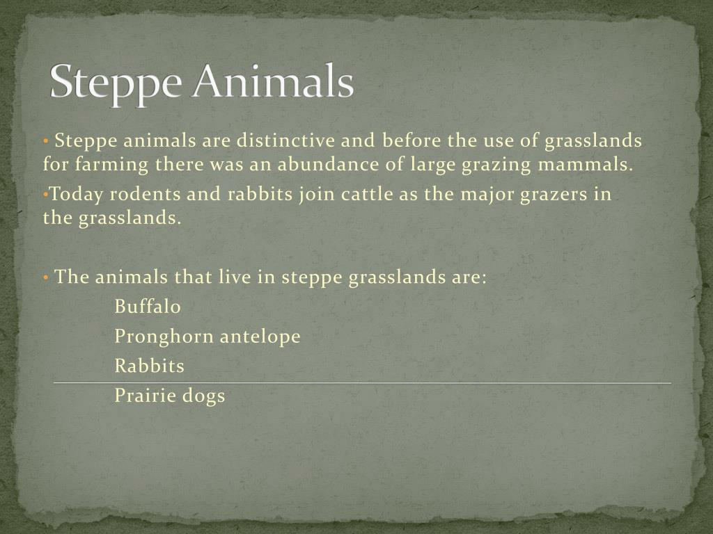 Steppe Animals