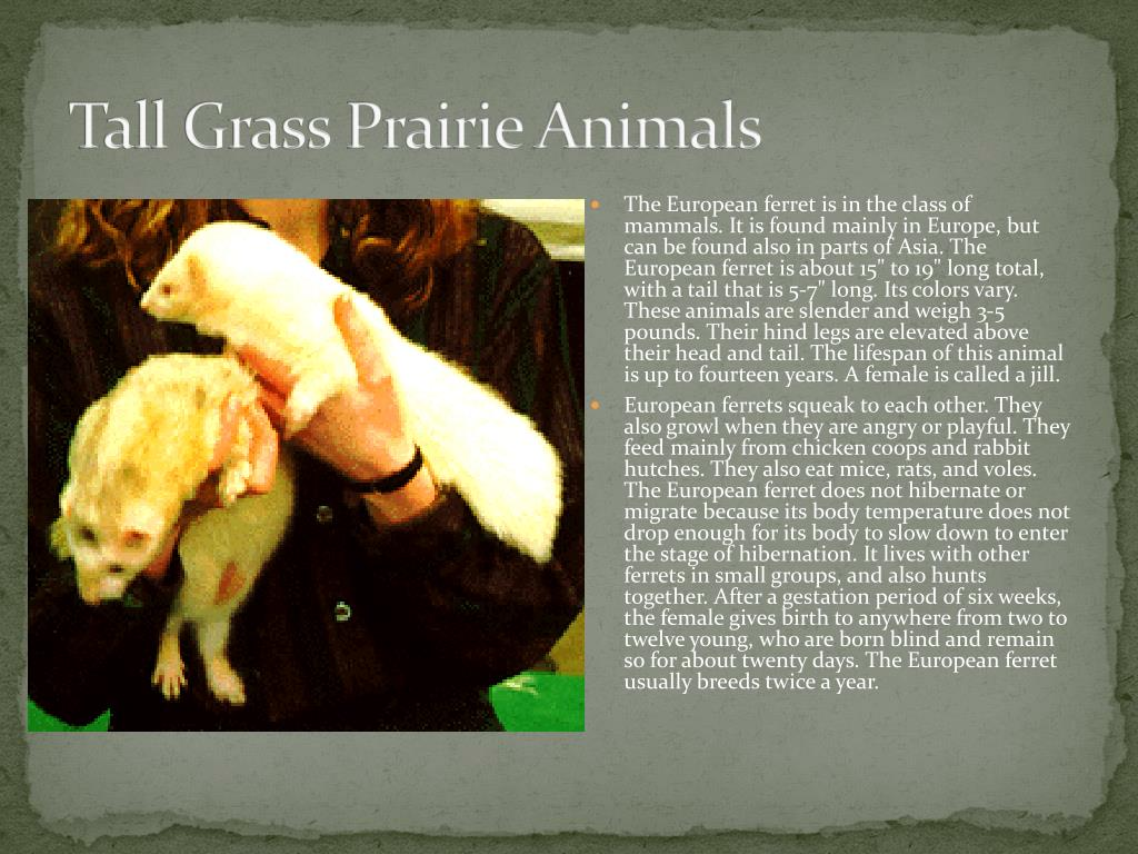 Tall Grass Prairie Animals