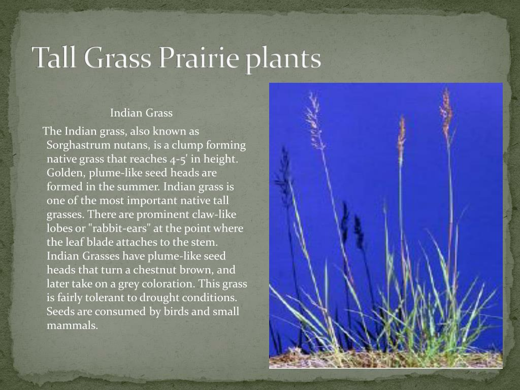 Tall Grass Prairie plants
