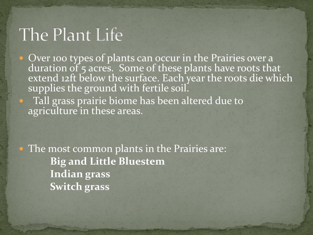 The Plant Life