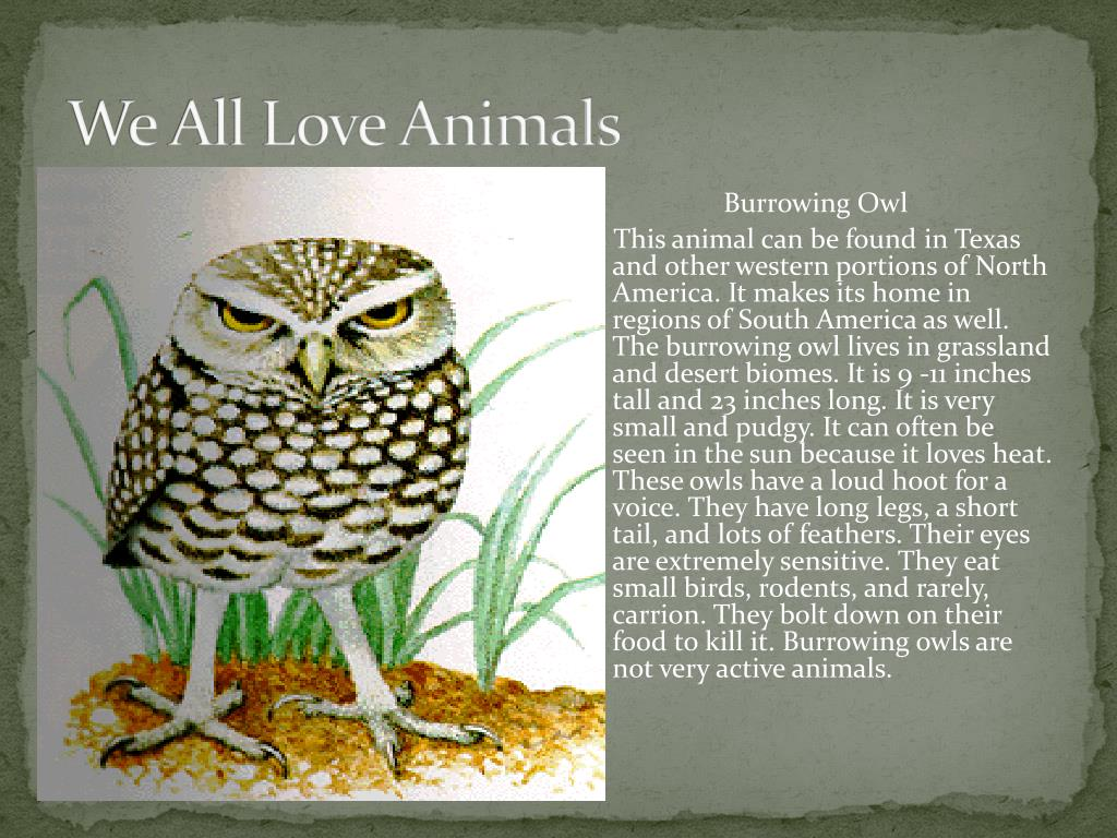 We All Love Animals