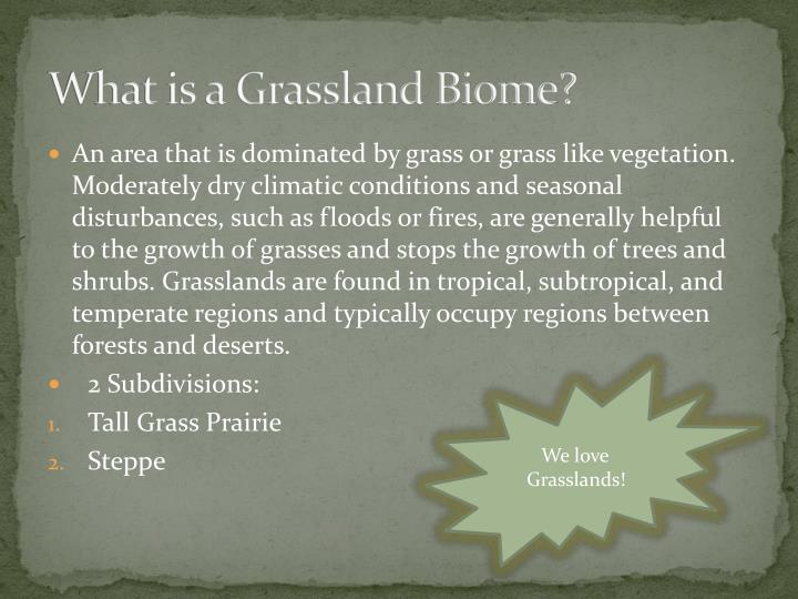 What is a grassland biome
