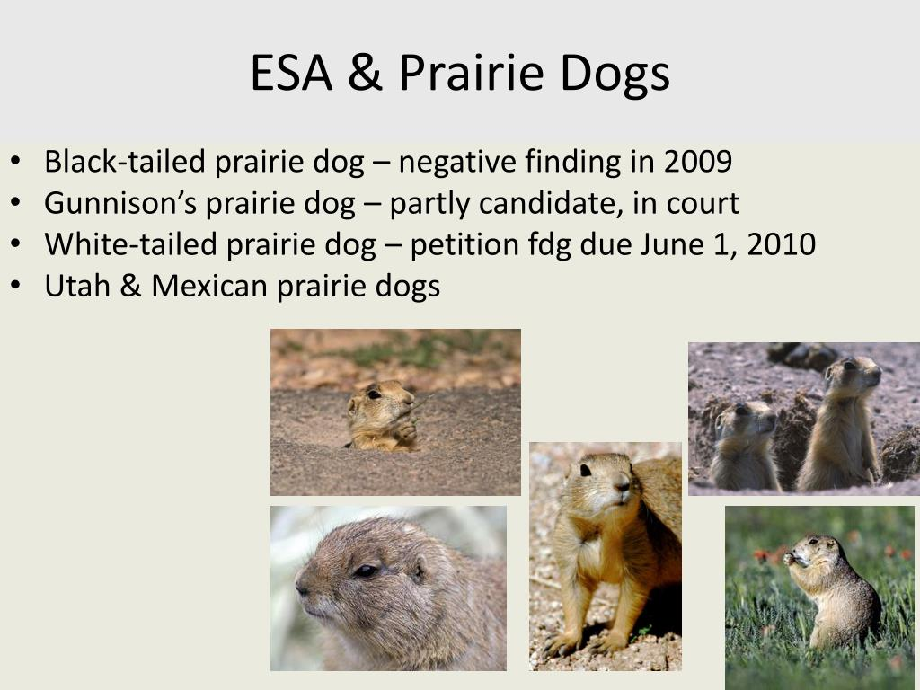 ESA & Prairie Dogs