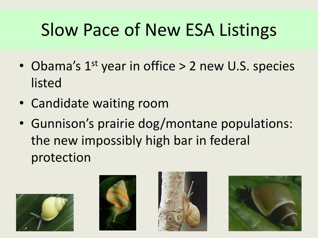 Slow Pace of New ESA Listings