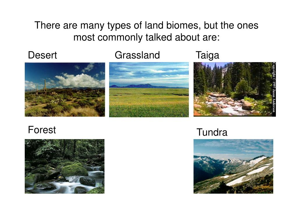 There are many types of land biomes, but the ones most commonly talked about are: