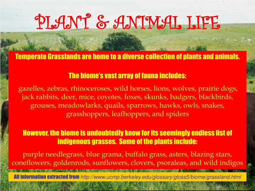 PLANT & ANIMAL LIFE