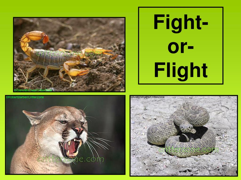 Fight-or-Flight