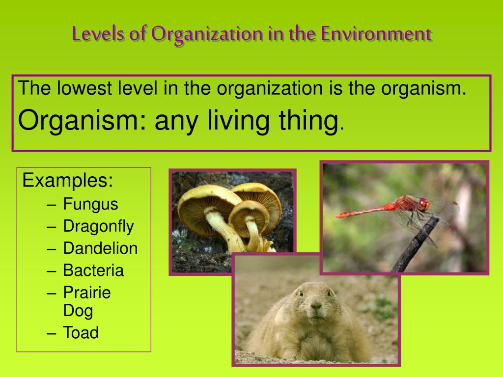 The lowest level in the organization is the organism.