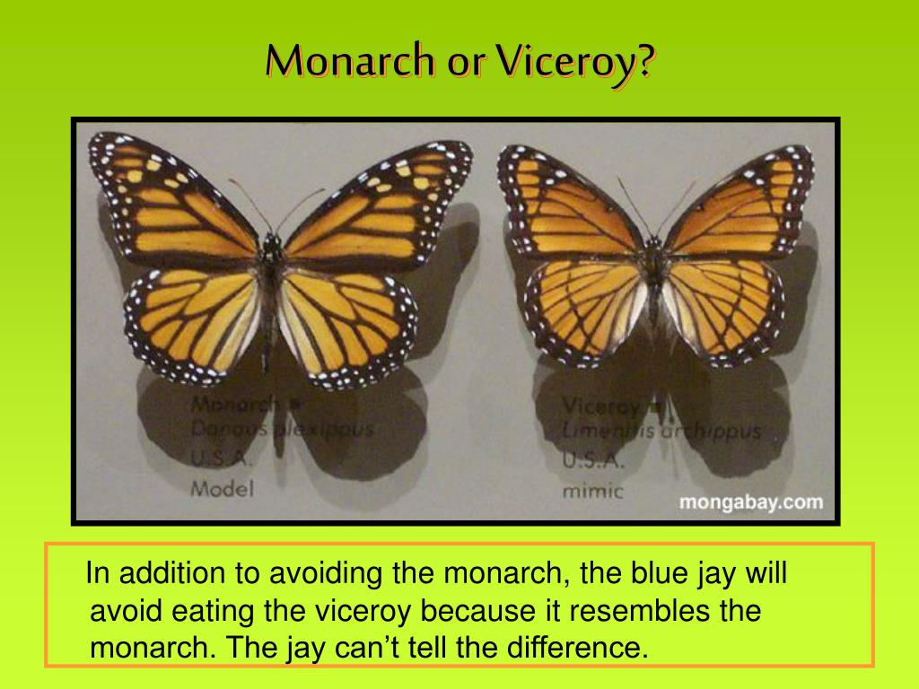 Monarch or Viceroy?