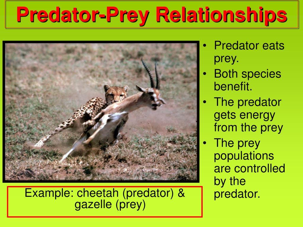 Predator eats prey.