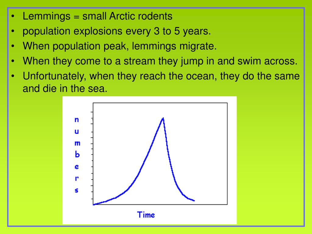 Lemmings = small Arctic rodents