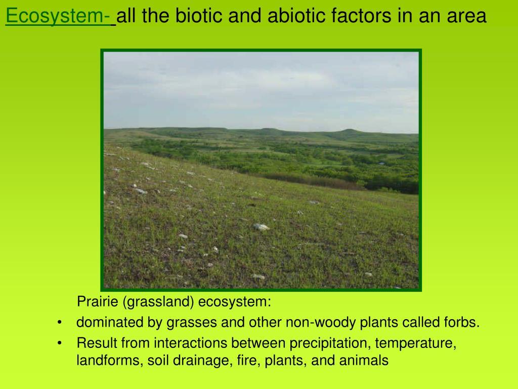 Ecosystem-