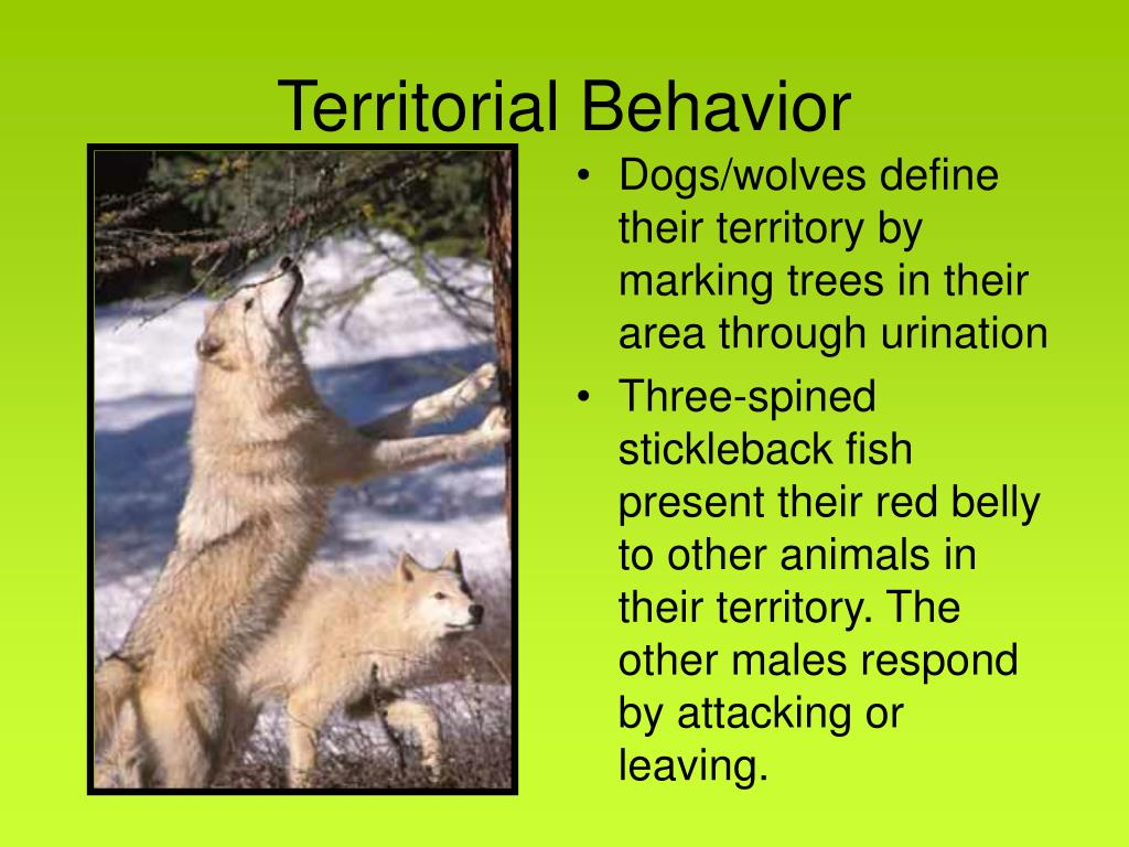 Territorial Behavior