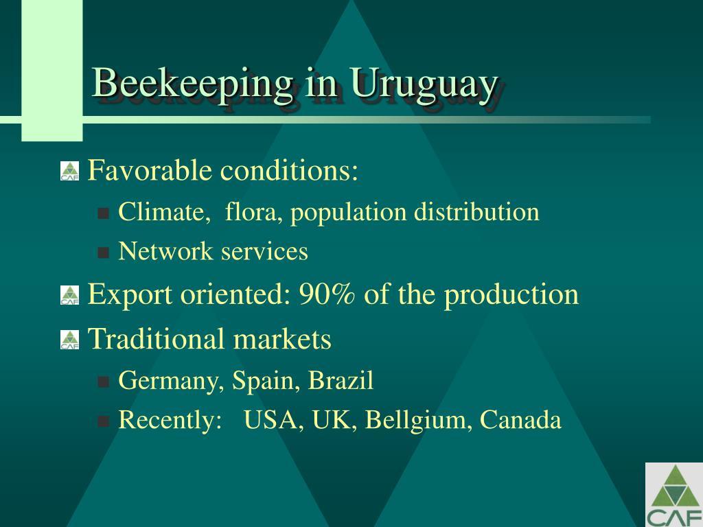 Beekeeping in Uruguay