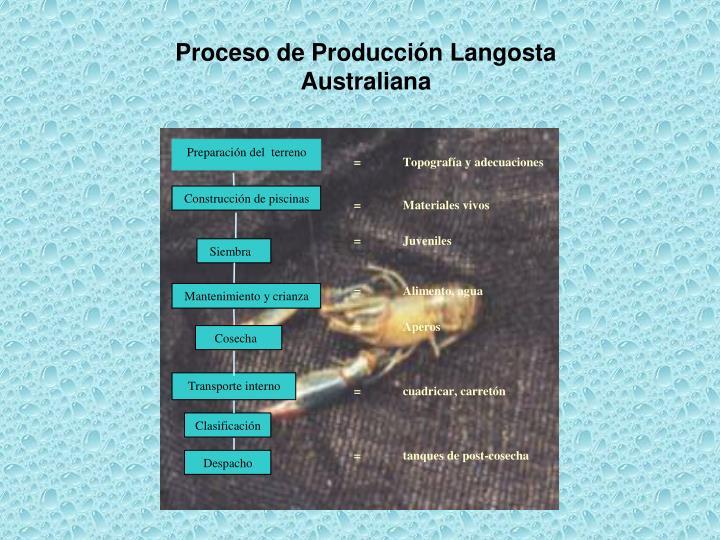 Proceso de Producción Langosta Australiana