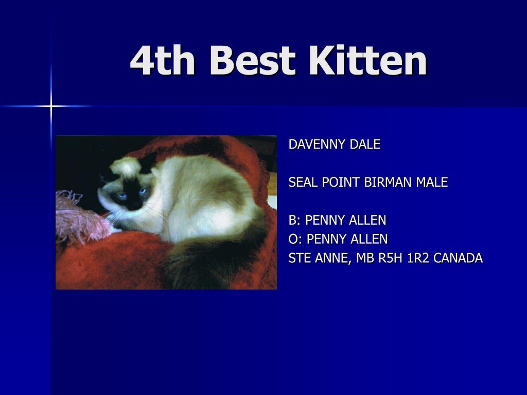4th Best Kitten
