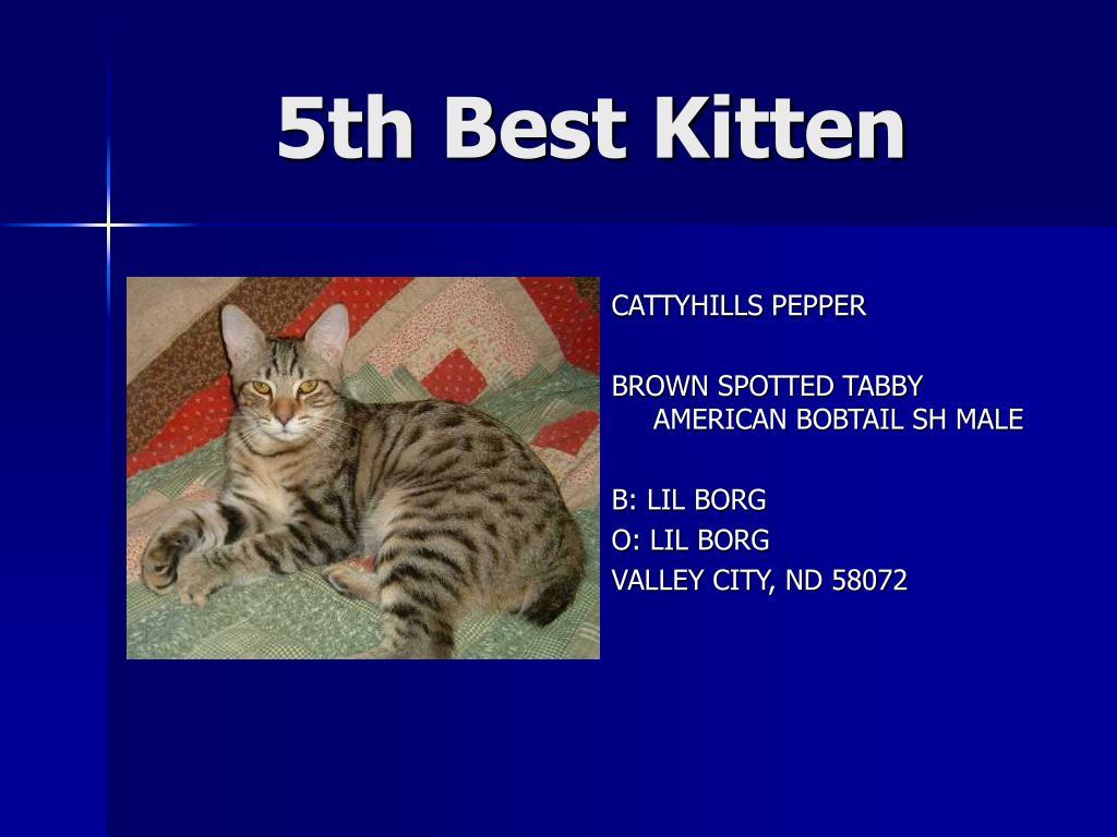 5th Best Kitten