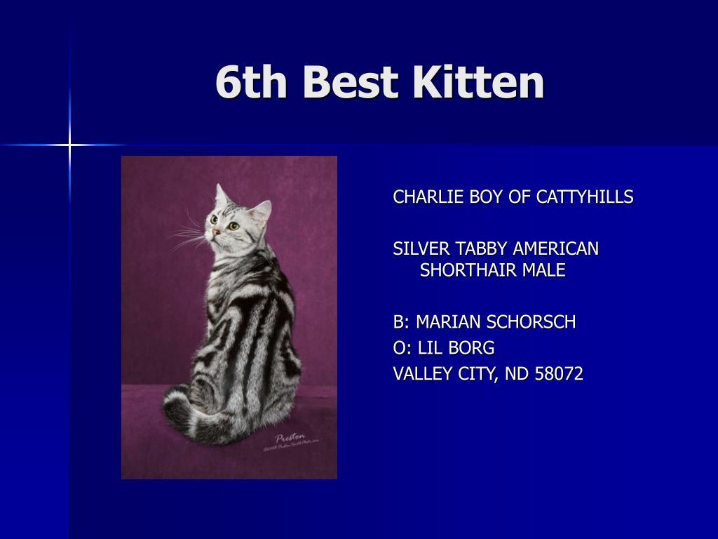 6th Best Kitten