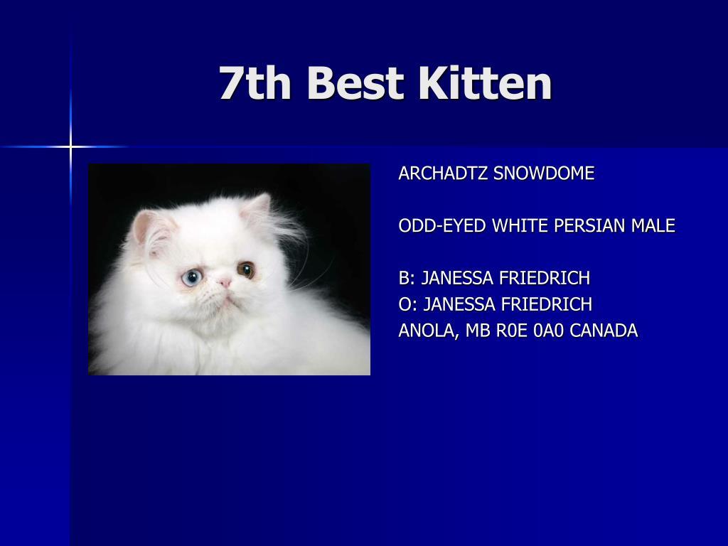 7th Best Kitten