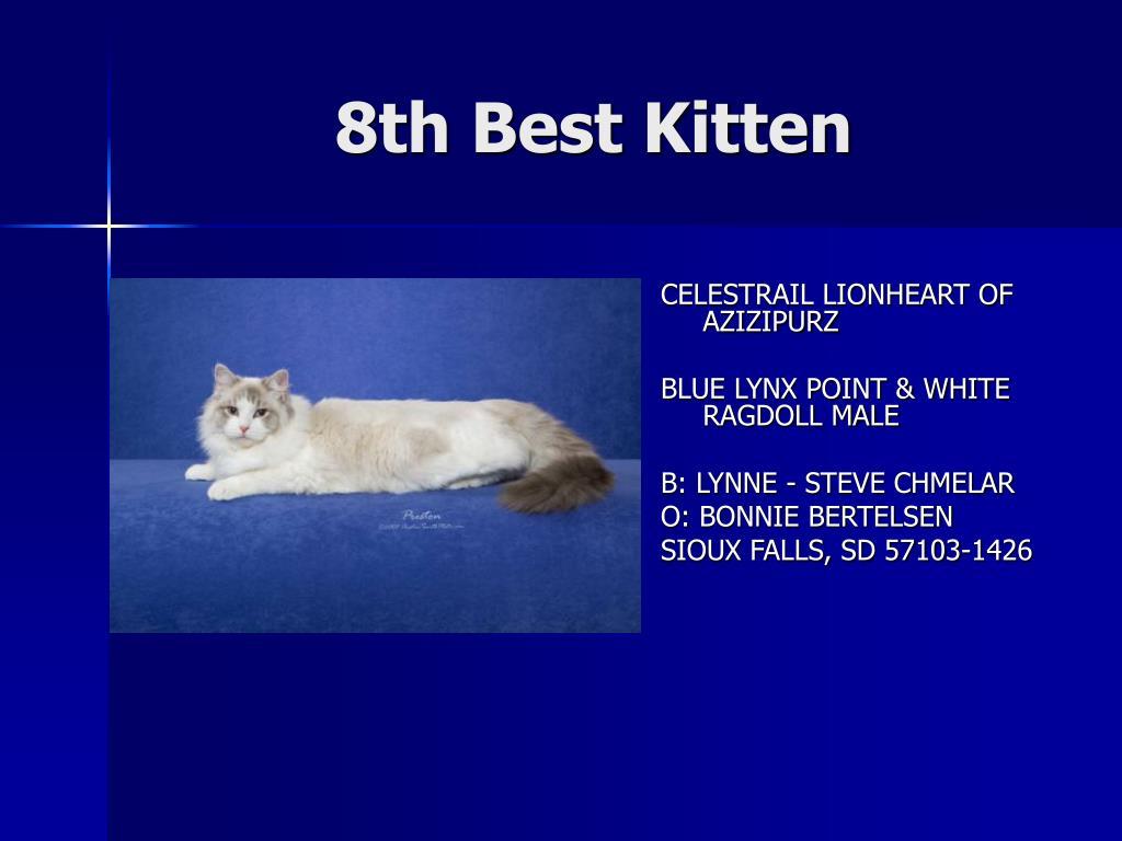 8th Best Kitten