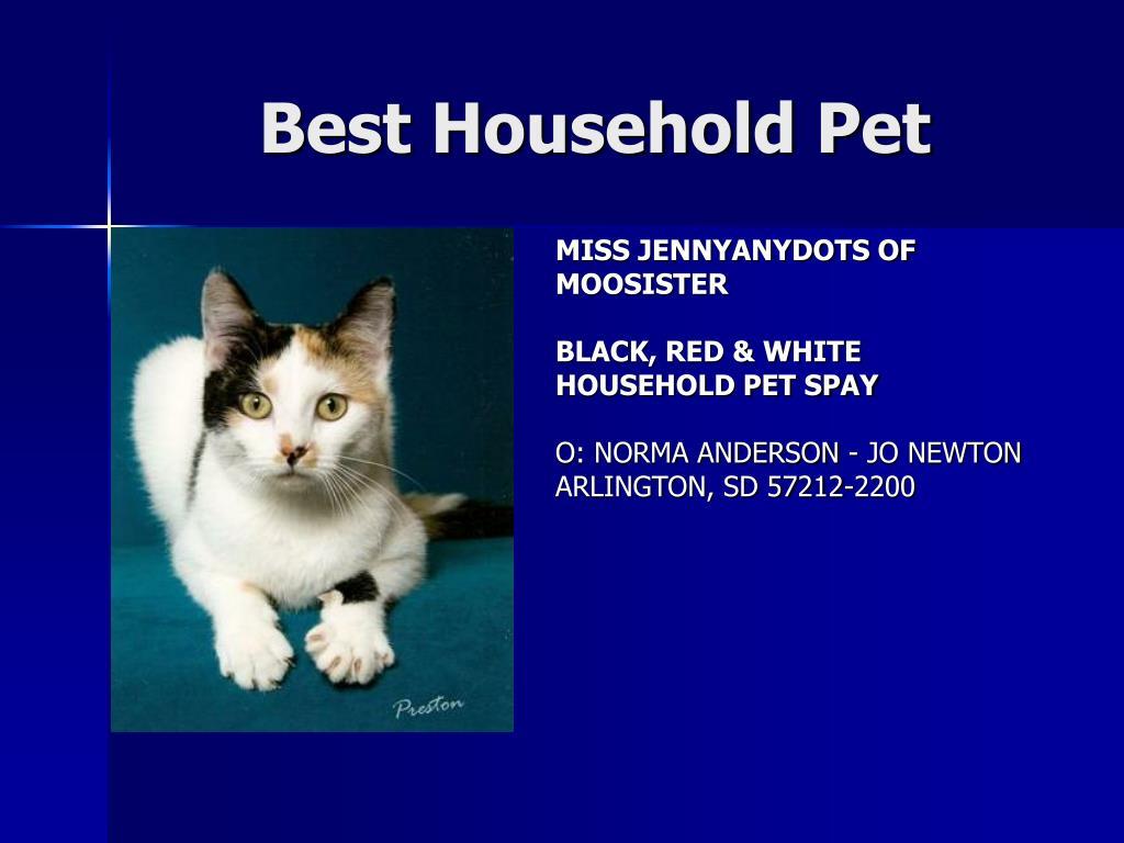 Best Household Pet