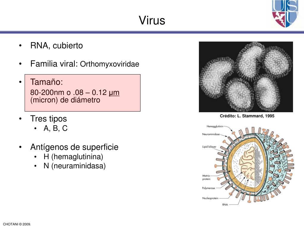 RNA, cubierto