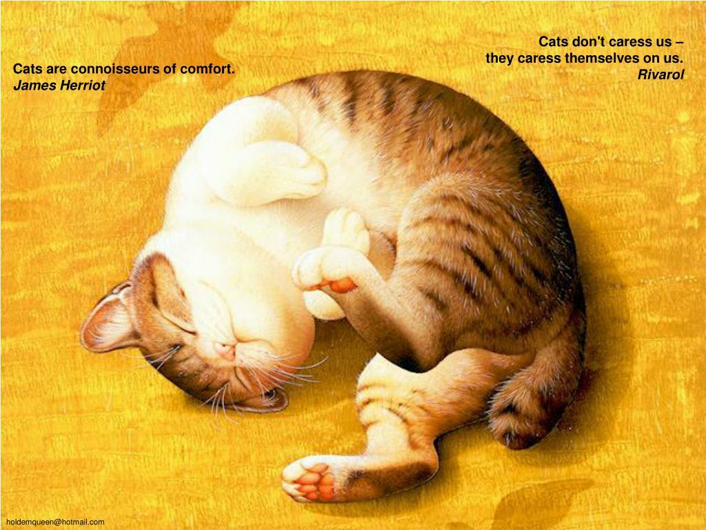 Cats don't caress us –